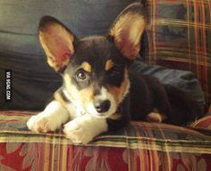 Dobby at 12 weeks!
