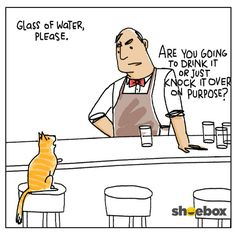 Cat walks into a bar. !! http://ift.tt/2f0ef5M