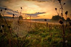 Cobwebs in the sun by ~xXxDinosaurusesxXx on deviantART