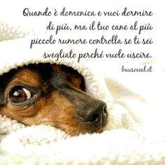 Ancora 5 minuti... (capita anche a voi?) . . #BauSocial #Milano #cane #cani #dog #dogs #iseeyou #love #life #instadog #Bau #dogstagram #puppy #tbt #tagsforlikes #sunday #solocosebelle #italia