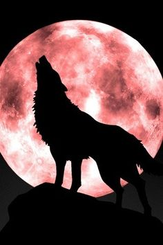 Black Wolf Howling at a Blood Moon.