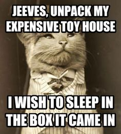Fancy Cat Request