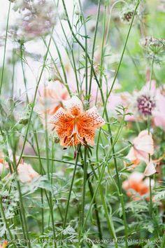 Trädgårdsflow: Juli