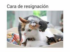 Cara de resignación