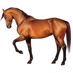 Carla, Riding Horse Thoroughbred Cherry bay - Howrse