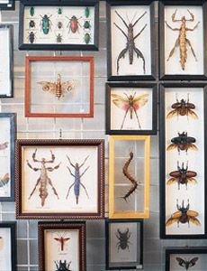 mounted butterflies and insects