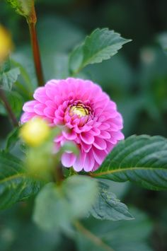 Colorful Garden, Colorful Flowers, Pink Flowers, Blossom Garden, Blossom Flower, Beautiful Gardens, Beautiful Flowers, Flowers Name List, Flower Games