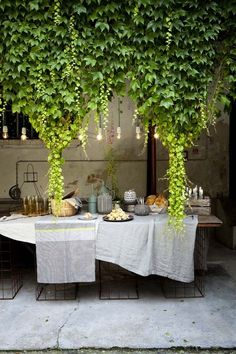 Lunch table under hanging vines