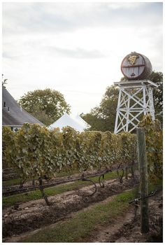 Truro Vineyards - Party Cape Cod Tidewater Clear Tent - Trish & Dan:: A Truro Vineyards Affair » Organic Photography