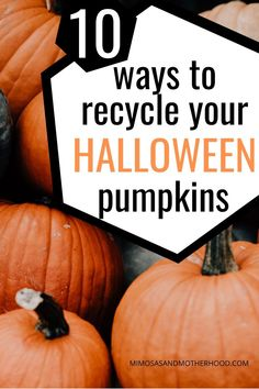 Wondering what to do with your old pumpkin after Halloween? If you're like me, I shy away from buying real pumpkins each fall because I don't want to waste them. It turns out there are some really great uses for leftover Halloween pumpkins! Holiday Crafts For Kids, Holiday Fun, Holiday Ideas, Festive, Thanksgiving Punch, Thanksgiving Preschool, Fall Pumpkins, Halloween Pumpkins, Diy Party