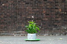 Shape-Shifting 'Origami' Pots That Grow Together With Your Plantsorigami-pot-plant-grows-studio-ayaskan-6