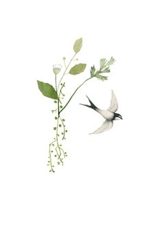 Image of Swallows in May