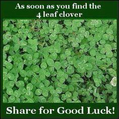 Four Leaf Clover for 'Good Luck'