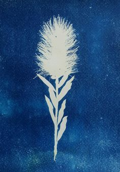 Lisa Shepherd is a textile designer and visual artist currently using photographic cyanotypes to create delicate, joyful artwork. Alternative Photography, Cyanotype, Blooming Flowers, Embroidery Art, Textile Design, Flower Art, Bottlebrush, Lisa, Artisan