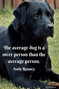 Quotes About Dogs eBook The average dog is nicer than the average person. Quote by Andy Rooney.The average dog is nicer than the average person. Quote by Andy Rooney. I Love Dogs, Puppy Love, Cute Dogs, Training Your Dog, Training Tips, Training Online, Pet Sitter, Animal Quotes, Dog Quotes Sad