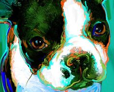 Boston Terrier dog art and pictures