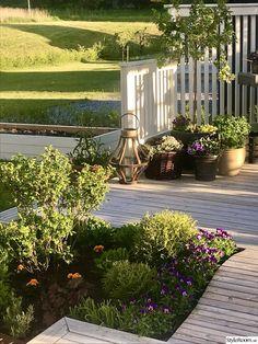 Nyanlagda rabatter runt trädäck och pergola - Hemma hos Titti07 Pergola Patio, Garden Design, Bra Tips, Plants, Gardening, Gardens, Lawn And Garden, Landscape Designs, Plant