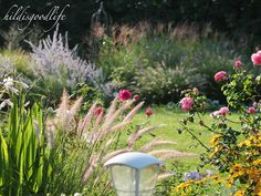 Grasses, Roses & Heliopsis