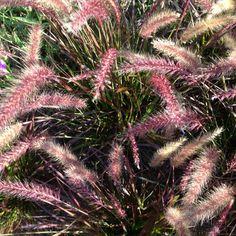 From garden at Stonewall Kitchen, York, Maine