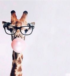 Jirafa hipster discovered by marti on We Heart It Imagen de animal, giraffe, and wallpaper Phone Backgrounds, Wallpaper Backgrounds, Iphone Wallpaper, Tier Wallpaper, Animal Wallpaper, Screen Wallpaper, Funny Animals, Cute Animals, Blowing Bubbles