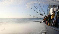 """In occasione della pubblicazione della ricerca """"Rebuilding marine life"""" sulla rivista Nature, MSC (Marine Stewardship Council) ribadisce l'assoluta centralità di un approvvigionamento ittico sostenibile per far tornare gli oceani al loro originale splendore. READ MORE"""