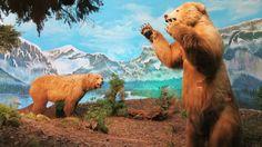 Historia (via Omar Omar) Arts Ed, Models, Polar Bear, Camel, Elephant, Nature, Animals, The World, Bears