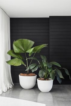 Potted Bliss: Indoor Plants 101 - Floor Plants - Ideas of Floor Plants - Potted Bliss: Indoor Plants 101 Design Field NotesDesign Field Notes Interior Plants, Interior And Exterior, Potted Plants, Indoor Plants, Hanging Plants, Pots For Plants, Balcony Plants, Hanging Succulents, Indoor Flowers