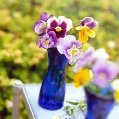 Pansies are old-fashioned favorite flowers that are always popular. Learn how to select pansy flowers, including ever-popular purple pansies. Get the basics on pansy care, including how to grow pansies with other flowers.