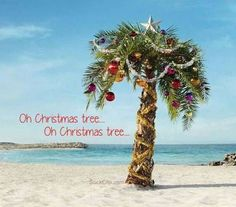 Image Result For Christmas Palm Tree Quote Unique Trees Tropical