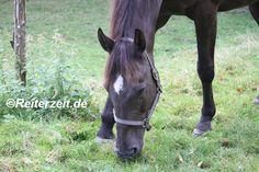 Was tun, damit mein krankes Pferd frisst? http://reiterzeit.de/kranke-pferde-fressen/