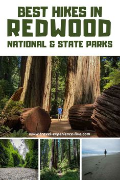 Top Hiking Trails in Redwood National & State Parks