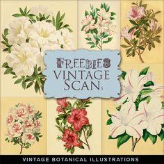 Far Far Hill: New Freebies Kit of VINTAGE Botanical Illustrations - II part
