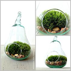 Pear shaped terrarium with live moss.