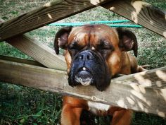 ...boxers sleep anywhere