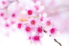 60 beautiful flower pictures 15