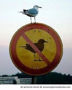 No birds does not mean no birds  http://amazinglytimedphotos.com/no-birds-does-not-mean-no-birds/#.VCh1mEt_zLQ