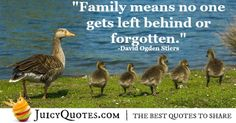 We have the best collection of family quotes because we ourselves believe in the importance of family. You will love these quotes and picture quotes David Ogden Stiers, Family Meaning, Family Quotes, Picture Quotes, Relationship Quotes, Best Quotes, Cool Pictures, Love, Sayings
