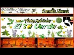 Beneficios del Té Verde, Remedios Caseros para Prevenir la Caries, Remedios Caseros para el  Acné - http://solucionparaelacne.org/blog/beneficios-del-te-verde-remedios-caseros-para-prevenir-la-caries-remedios-caseros-para-el-acne/