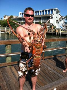 Now thats a lobster Lobster Fishing, Underwater Life, Deep Water, Big Fish, Saltwater Fishing, Freshwater Fish, Sea Creatures, Diving, Florida
