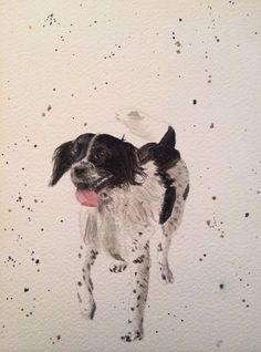 Spaniel watercolour painting