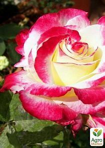 Лилий донецк цветы оптом купить украина невесты