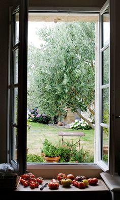 Ripening tomatoes, Mimi Thorisson strongarbh house, isle of mull - shutters Farmhouse Windows Farmlife
