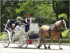 Carriage ride in the Central Park, New York