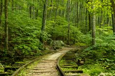 Forgotten and unused track in the Blue   Ridge Mountains used during the Civil War.  Looks so peaceful now.  Love!