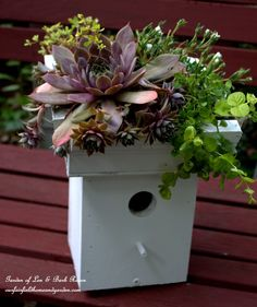 Turn an ordinary birdhouse into a wonderful succulent planter with this easy tutorial.