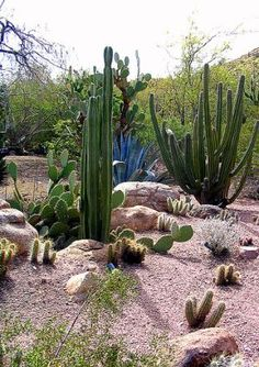 The southwest garden style is similar to xeriscaping. Plants that require minimal watering and an overall low-maintenance design are essential. For best results, choose native plants that are suitable for arid climates. Cacti are trademark plants of desert landscaping, but there are a number of drought tolerant plants that can add color to your outdoor space while complementing the southwestern theme.