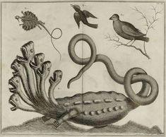 Créatures extraordinaires 🐉 #dragon, hydre, #serpent marin... Repoussez les frontières du monde connu avec la découverte de bêtes fabuleuses qui s'affichent dans certains livres anciens illustrés sur #numelyo #VendrediLecture #monstres #collectionspatrimoniales