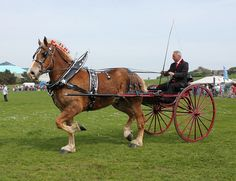 Southsea Heavy Horse Parade # Explored # 237 | Flickr - Photo Sharing!