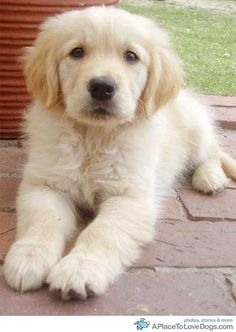 Gorgeous Golden. I want one and I'm going to name it rosy.