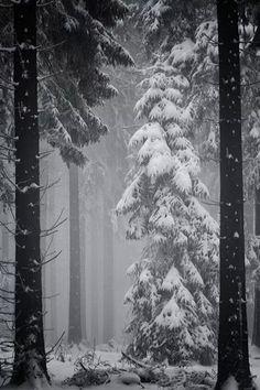 Зима !